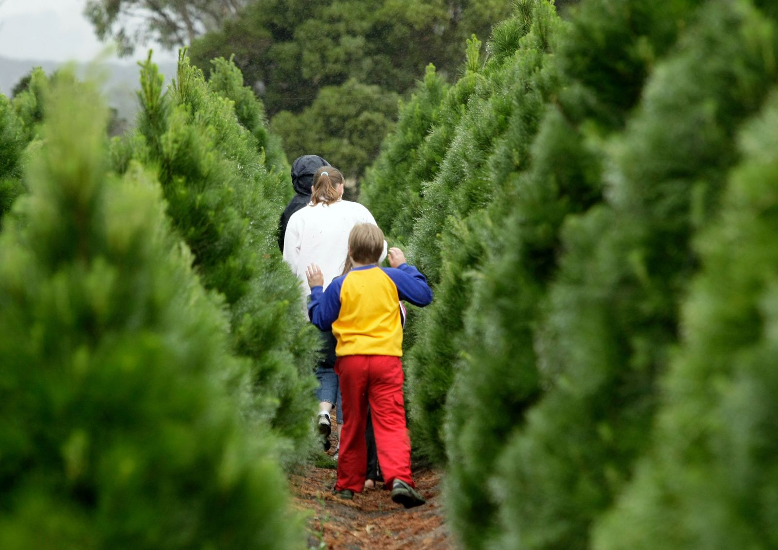 Picking Christmas tree